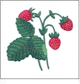 Berry Delicious Embroidery Designs by Amazing Designs on a Multi-Format CD-ROM ADC-189